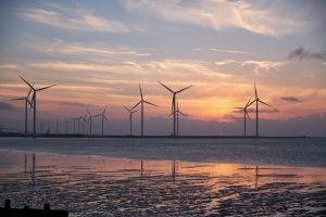 Bescherming dieren bij ontwikkeling windparken